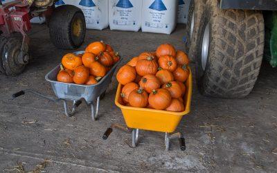 Food Durham carves new Halloween habits