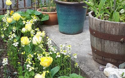 What treasures are in your garden?