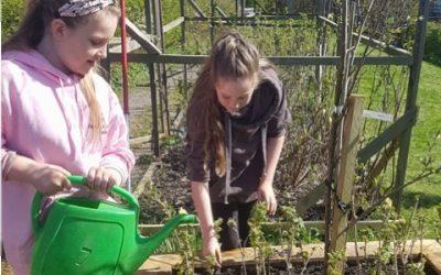 Growing Ushaw Moor