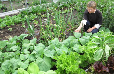 Growing Salads through the autumn and winter