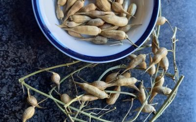 New seed saving and sharing group established in County Durham